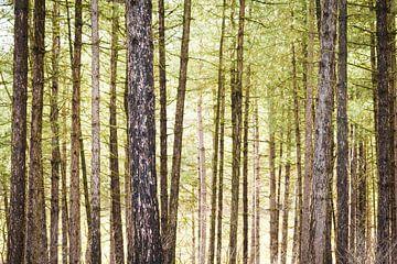 Bos - liggend van Dennis Kuzee