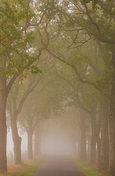 Mistig bomenlaantje van Mark van der Walle