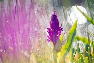 Orchidee van Ronald Jansen