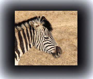Zebra von Jose Lok