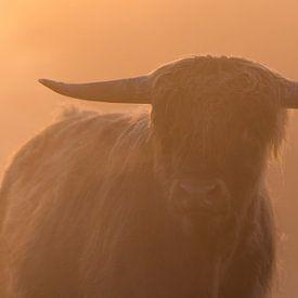 Highland cattle portrait  von Richard Guijt