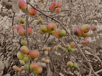 4. Appelboom van Alies werk