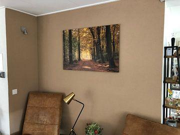 Kundenfoto: Bunter Waldweg im Herbst von Cor de Hamer