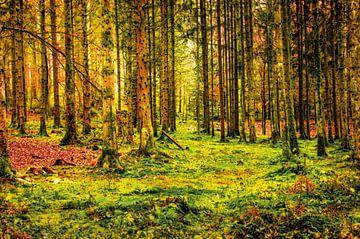 Wald mit Moosen und Farnen