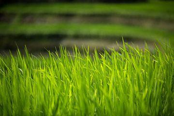 Rijstterrassen - Bali, Indonesië von Martijn Smeets