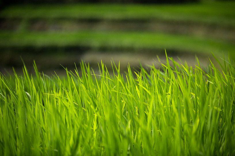 Rijstterrassen - Bali, Indonesië van Martijn Smeets