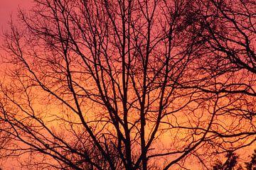 Rot-gelbe Sonne hinter den Bäumen von Audrey Nijhof