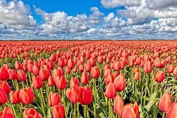 Tulpen landschap van eric van der eijk
