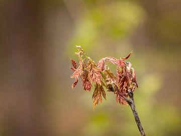 Lente in het bos van Anke de Haan