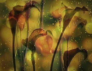 Liefde voor aronskelken . van Saskia Dingemans