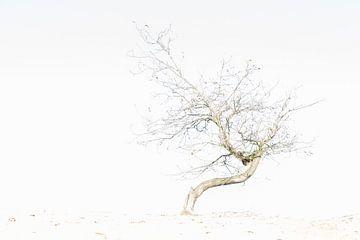 Herfst op het zand I van Marc Arts
