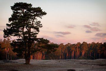 Het landschap van Bornia Heidestein van Studio de Waay