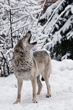 Le chant du loup. sur Michael Semenov