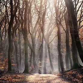 forest les bois des arbres sur ÇaVa Fotografie