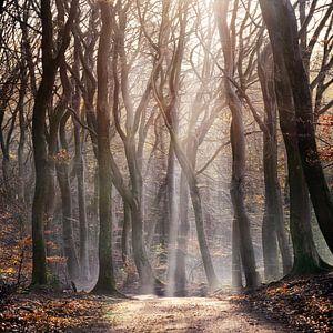 into the woods, in het bos