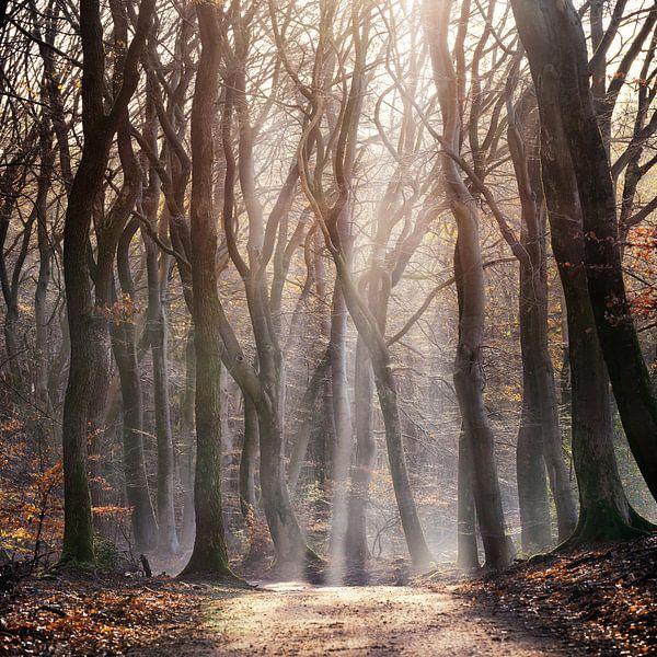 into the woods, in het bos van ÇaVa Fotografie