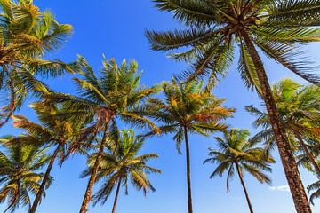 Palmbomen blauwe lucht van Dennis van de Water