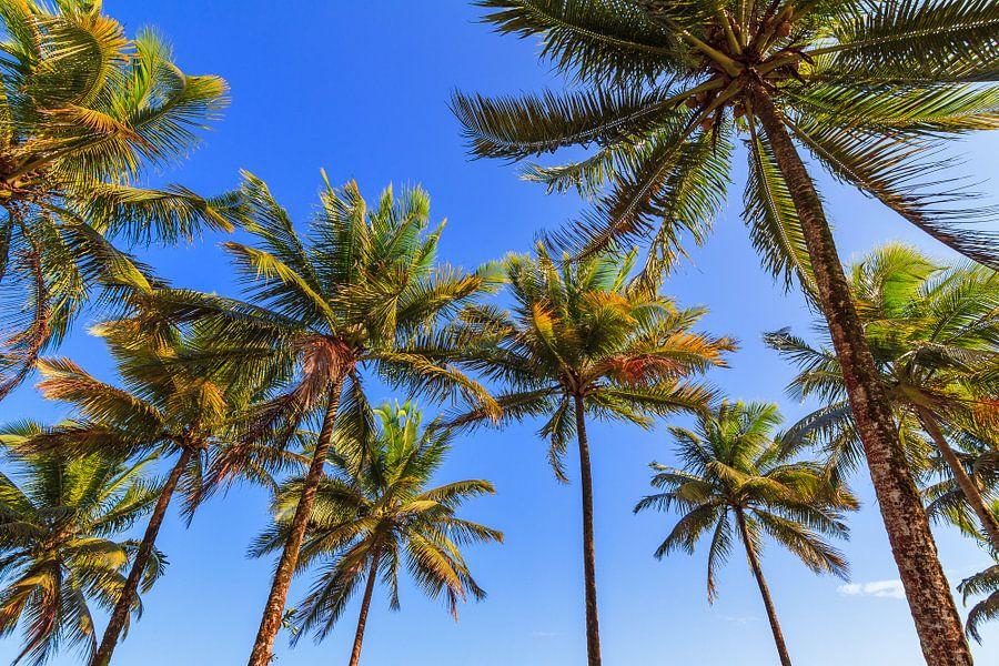 Palmbomen blauwe lucht