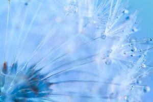 Blauwe druppels op Paardenbloem van Mark Scheper