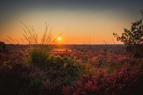 Sonnenuntergang auf einem Feld voller Heideflächen