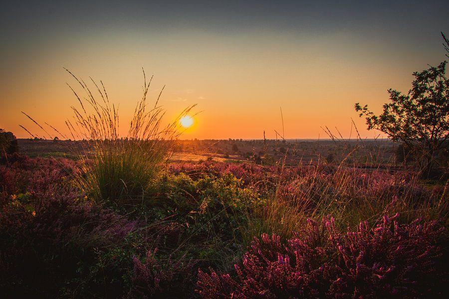 Zonsondergang op een veld vol heide
