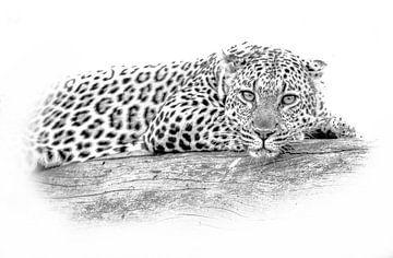 Leopard von Robert Styppa