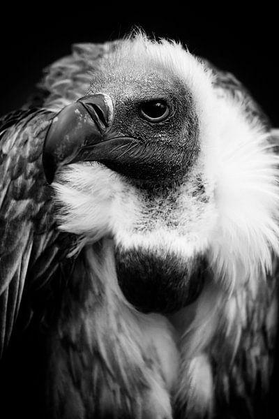 Le vautour sur Jan Brons