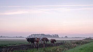 Koeien in ochtendlandschap van Wouter Bos