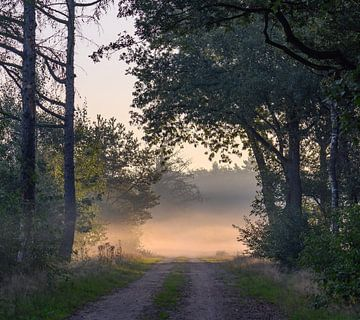 angenehmer Spaziergang von Tania Perneel