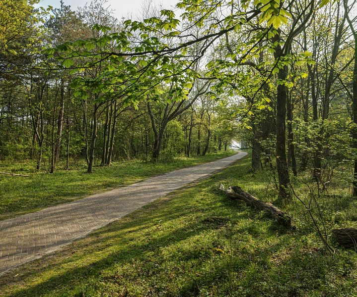 Fietspad door het bos van Bastiaan Schuit