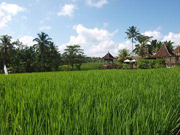 Rijsvelden Bali van Annie Lausberg-Pater