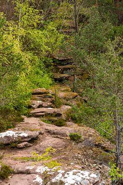 Wandelpad in het Pfälzerwald