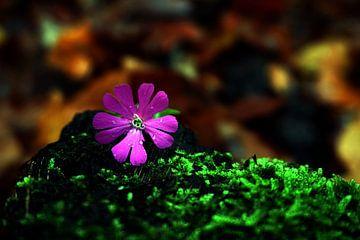 Little flower in the fall van Sanneke van den Berg
