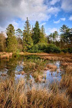 Bewaldete Landschaft mit Spiegelung in einem schilfbedeckten Teich. von Jenco van Zalk