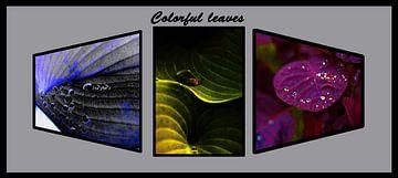 3luik genaamd colorful leaves von foto-fantasie foto-fantasie