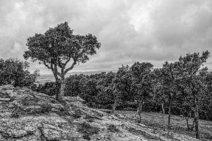 Landscape Costa Brava van