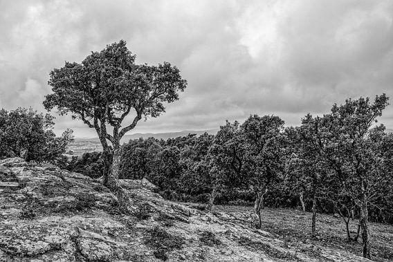 Landscape Costa Brava van Wessel Krul