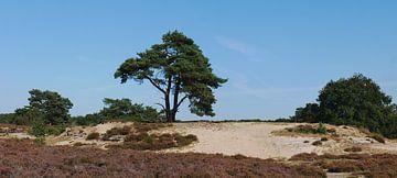 Sandverwehte Forstwirtschaft Ruinen von Wim vd Neut