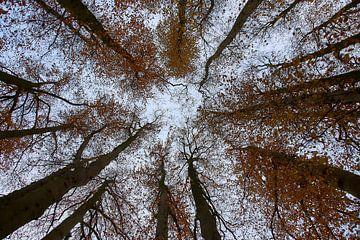 Gruppe von Buchenbäumen von Ad Jekel