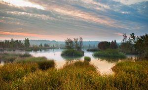 Herfst Heide