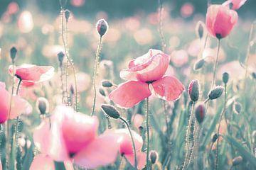 Mohnblumen Wiese pastell von Julia Delgado