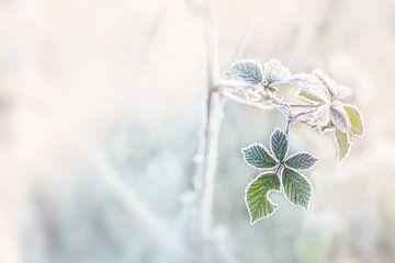 Frozen leaf sur Christa Thieme-Krus