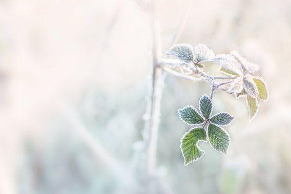 Bevroren blad van Christa Thieme-Krus