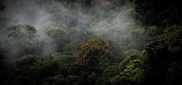 Panorama de la forêt sombre sur Jeroen Mikkers
