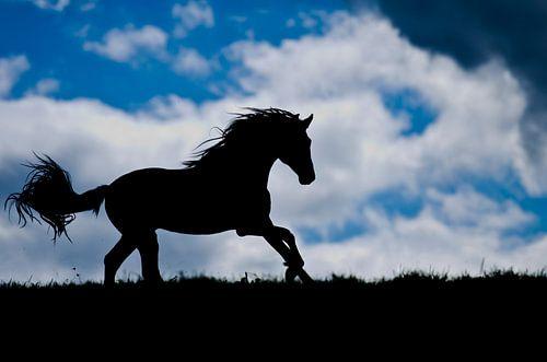 Paarden silhouette van