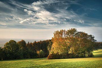 Heldere bomen in de herfst van Max Schiefele