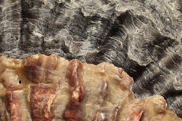 Oesterschelpen rechts van