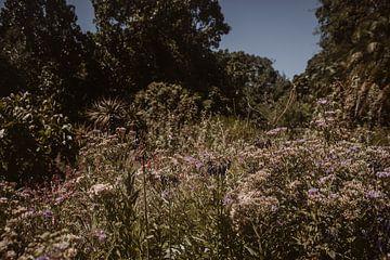 Botanische tuin | Kirstenbosch | Zuid-Afrika | Kaapstad van Floor Bogaerts