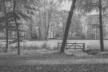 Hekje in het bos von Julia Booi