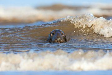 Grey Seal in der Brandung von Jeroen Stel